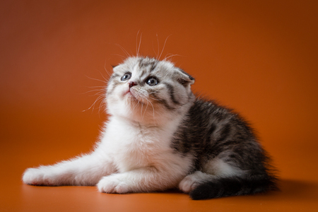 Cute kitten lying on a white background, one month old.
