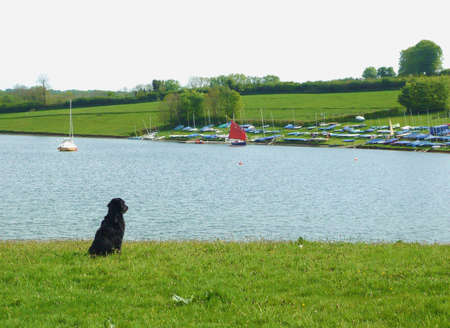 A dog very interested in sailing.  This photo was taken at Wimbleball Lake, Exmoor, South West England Stock Photo