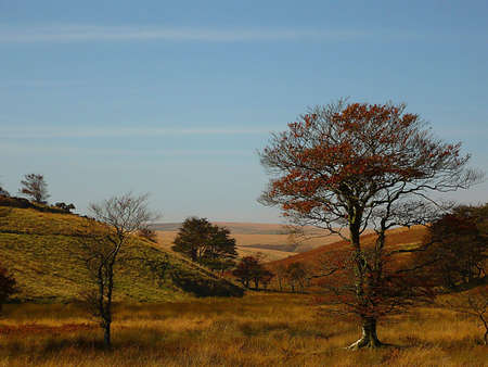 sparse: Autumn at Larkbarrow, the wilder part of Exmoor, South West England Stock Photo