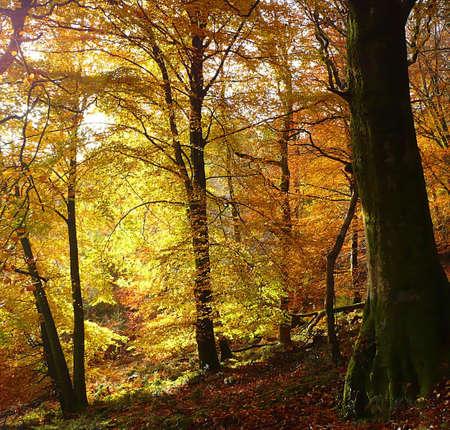 southwest: Herfstachtige bomen, Exmoor, Zuid-West Engeland Stockfoto