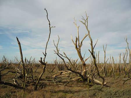 Porlock Marsh, Exmoor, South West England, where the sea is reclaiming the land Stock Photo