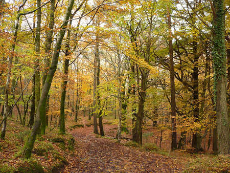 exmoor: Path through autumnal trees, Exmoor, South West England