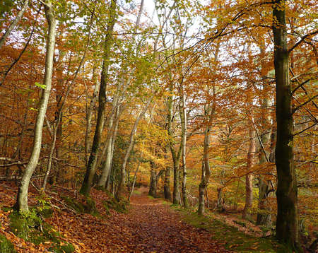 Walking through autumnal trees, Exmoor, South West England photo