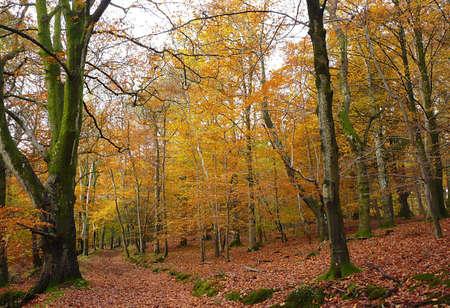 Autumnal tree walk, Exmoor, South West England Stock Photo - 3921278