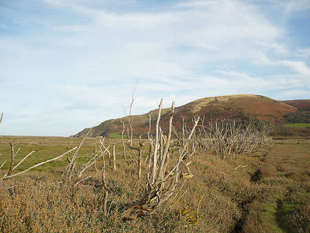 Porlock Marsh, where the sea is reclaiming the land, and Bossington Hill in the background, Exmoor, South West England