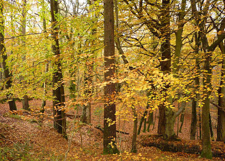 Autumnal trees, Exmoor, South West England photo