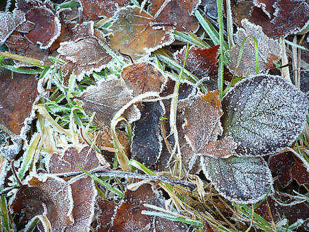 Frost on leaves on the ground, South West England Stock Photo