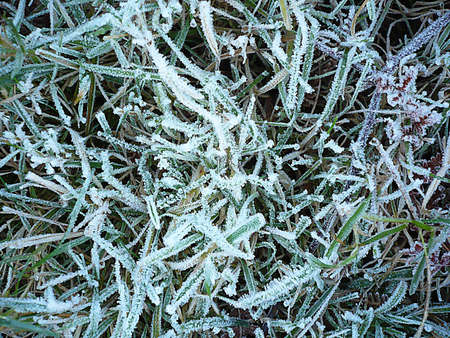 A hard frost on grass on the moor, South West England