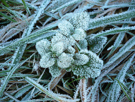 Frost on leaves and grass on the moor, South West England