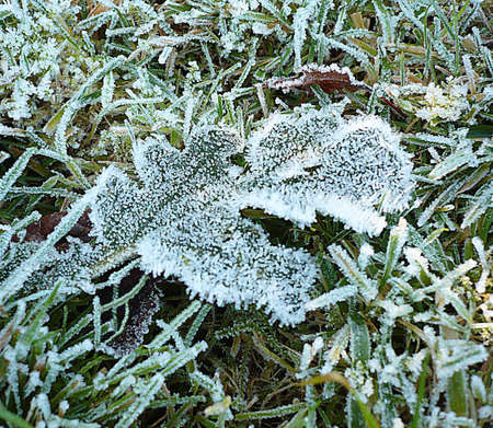Frost on leaves on the ground on the moor, South West England