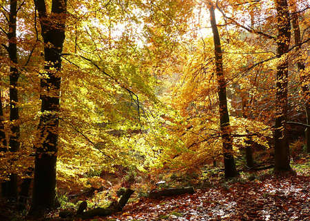 Autumnal looking trees, Exmoor, South West England Stock Photo