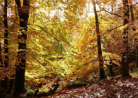 southwest: Herfstequinox zoekt bomen, Exmoor, Zuid-West-Engeland