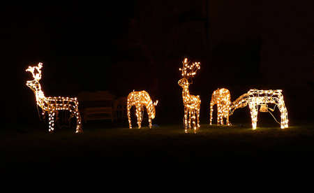 Christmas outdoor decorations, reindeer grazing, South West England