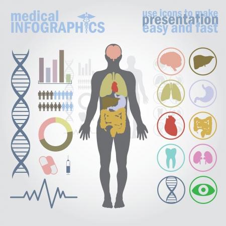 Infografía médica. Presentación establecida. Cuerpo humano con los órganos internos además de botones. Diagrama (gráfico), cardio gramo.