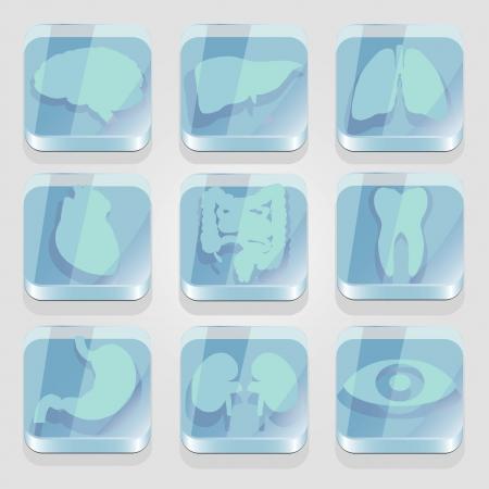 Medical app buttons set. Internal organs  in glass buttons.