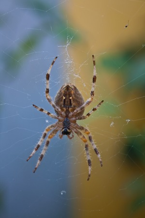 crawly: Spider on its web