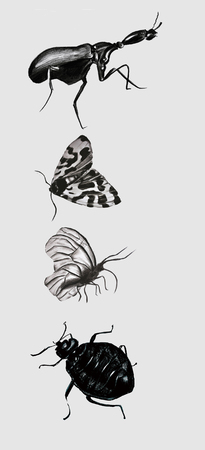 insects Reklamní fotografie