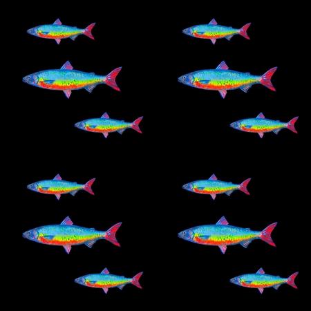 whitefish: whitefish pattern