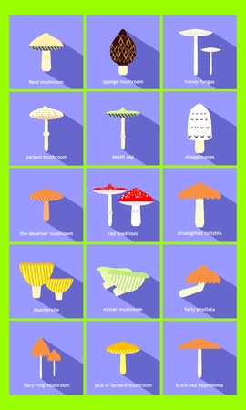 most: most common mushrooms