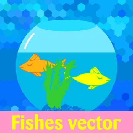 Quarella fishes