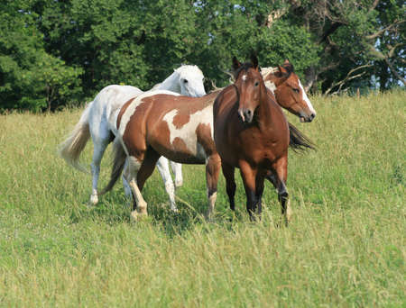 Beautiful horses in a countryside field