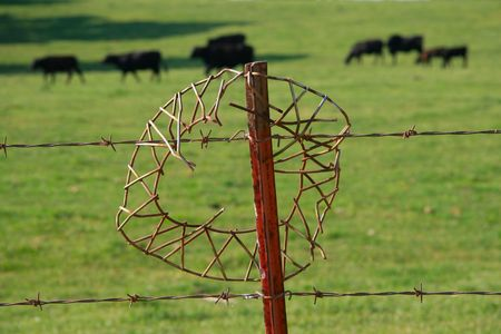 barbed wire fence art photo