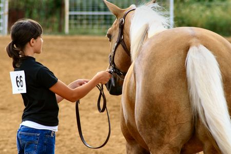 reins: Young rider and horse competing in a horse show