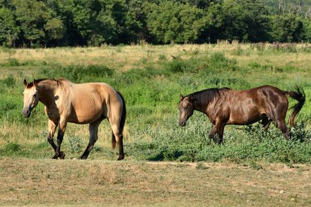 pal: blind horse closely followed by sighted pal