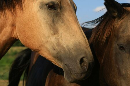 blind horse with sighted friend