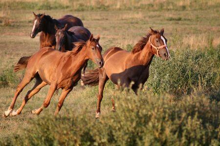 4 頭の馬をギャロップで