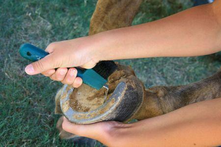 muddy hoof of a horse