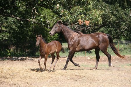 mare and colt running their corral