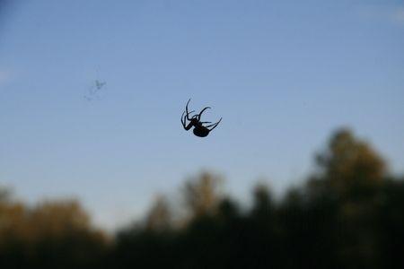 spider web designer