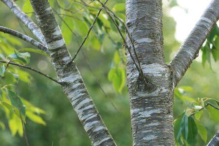 tree texture Zdjęcie Seryjne