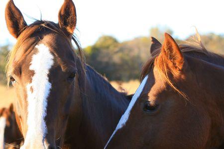 head shots: Horses closeup head shots