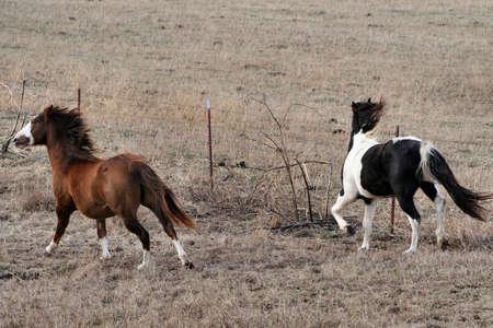 Horses at play Stock Photo - 710962
