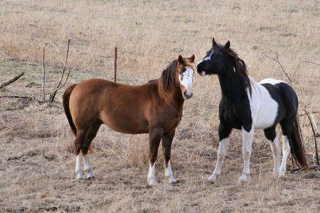 Paarden Stockfoto