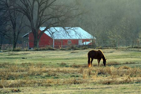 Red barn and grazing horse