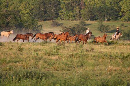 Running a horse herd