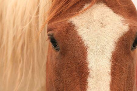 Close up horses face