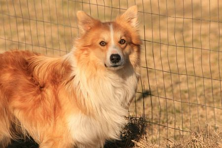 Family dog Imagens