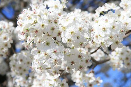 Springtime blossoms Stock Photo