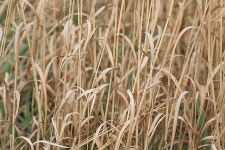 草原の草 写真素材
