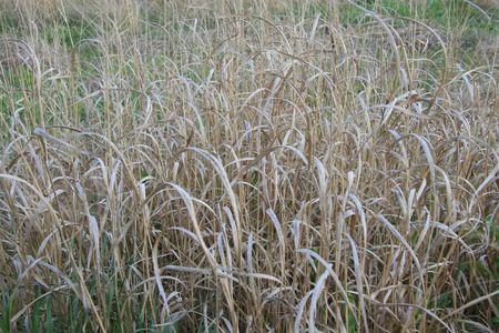 Natural grassland Stock fotó