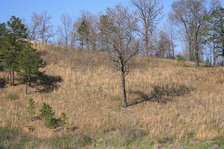 Forest 版權商用圖片 - 881680