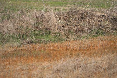 pairie grasses around a pond 版權商用圖片