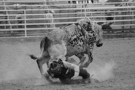 Cowboy thrown off a bull
