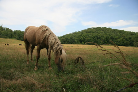 Tangled maned horse grazing photo