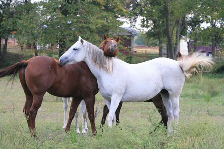 antics: Horseplay