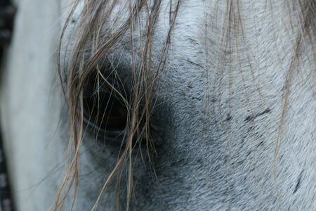 Captivating and beautiful equine eye